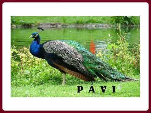 pavi_-_yveta
