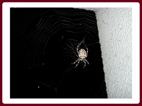 pavouci_1