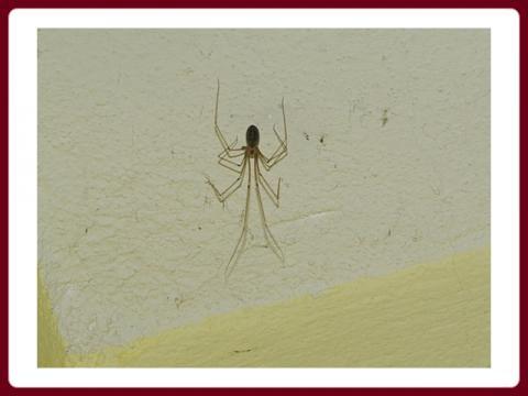 pavouci_2