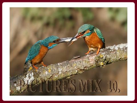 pictures_mix_-_ildy_10