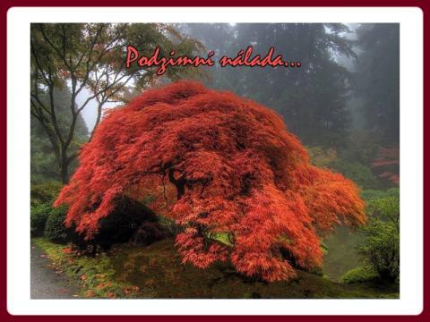 podzimni_nalada_-_autumn_spirits_john