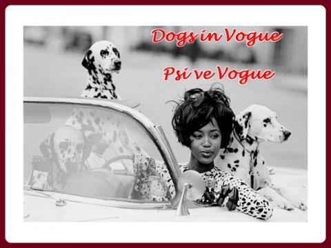 psi_ve_vogue_-_magda