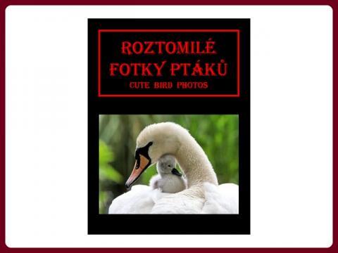 ptaci_-_oiseaux_-_cute_bird_photos_-_pogi_cz