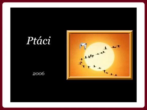 ptaci_2006_renee_-_belles_photos_oiseaux_cz