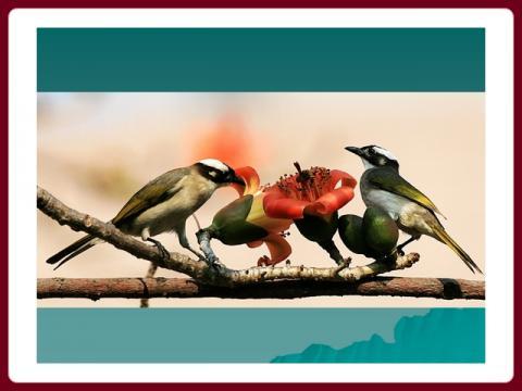 ptaci_a_kvetiny_-_sublime