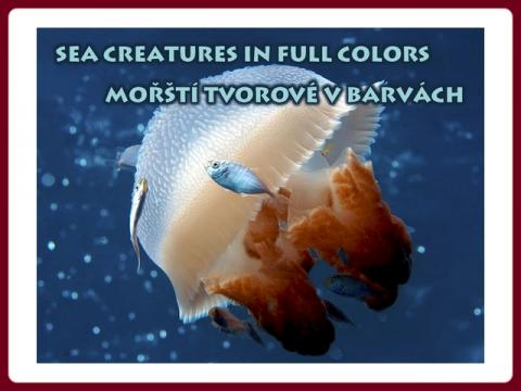 sea_creatures_in_full_colors_-_raymond