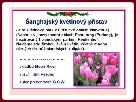sanghajsky_kvetinovy_pristav_-_shanghai_tulip_cz