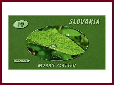 slovensko_muranska_planina_-_flora_-_steve_cz