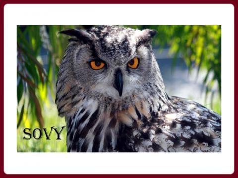 sovy_-_yveta