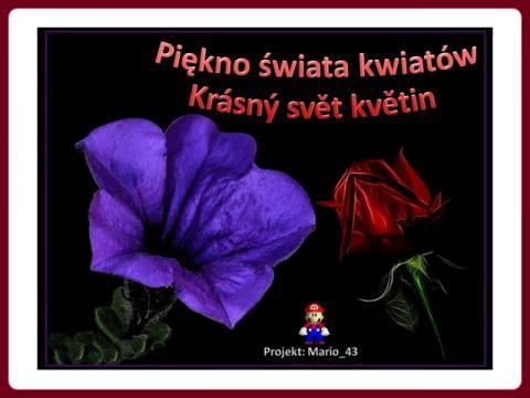 svet_kvetin_-_swiat_kwiatow