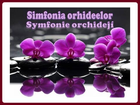 symfonie_orchidei_helen