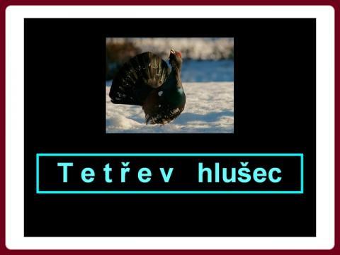 tetrev_hlusec
