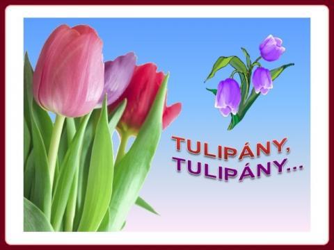 tulipany_jokoretsina