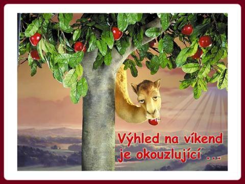 velbloud_-_vyhled_na_vikend