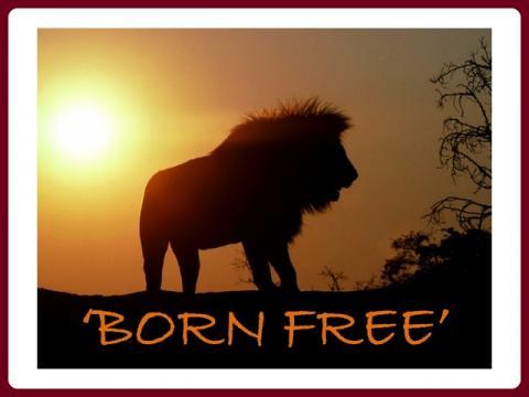 volani_divociny_-_born_free_-_john