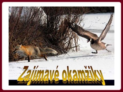 zajimave_okamziky
