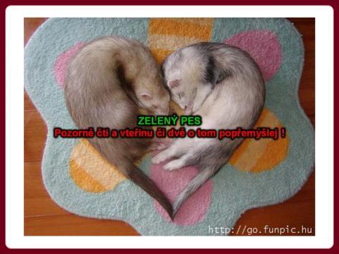 zeleny_pes_honza