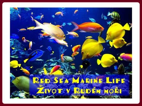 zivot_v_rudem_mori_-_red_sea_marine_life_-_olga_e
