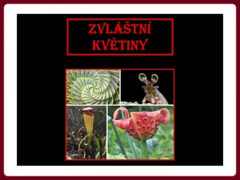 zvlastni_kvetiny_cz
